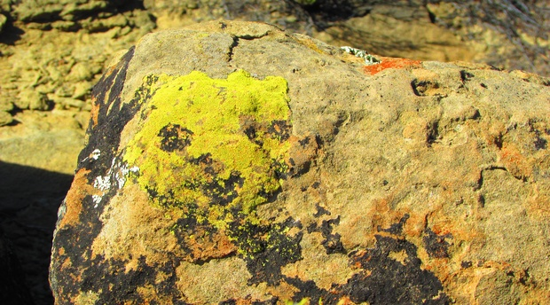 Lichens - Did You Know? - Rogge Cloof Private Sutherland Estate